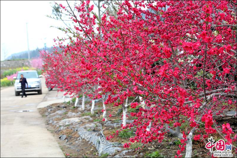 游客们或漫步乡间小道,或穿行于桃林之间……3月18日,雨后的黄猫垭图片