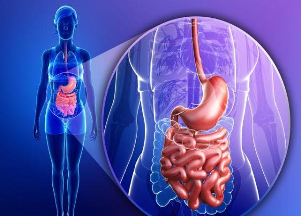 脾脏解剖结构画图